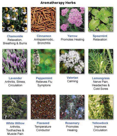 aromatherapyherbs