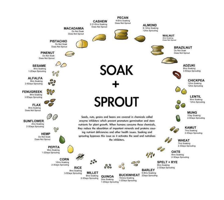 soak-sprout